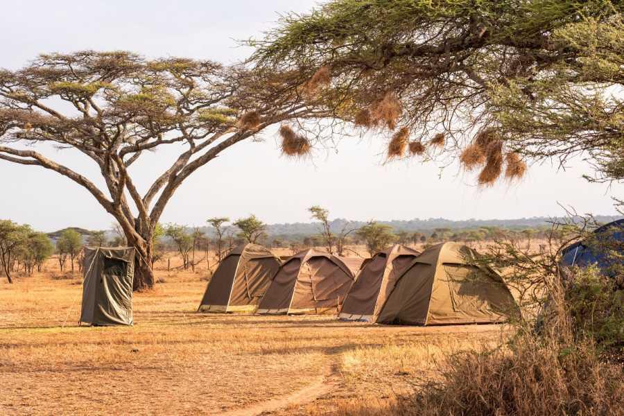 ECO-AFRICA CLIMBING 6 DAYS WILDEBEEST SERENGETI MIGRATION