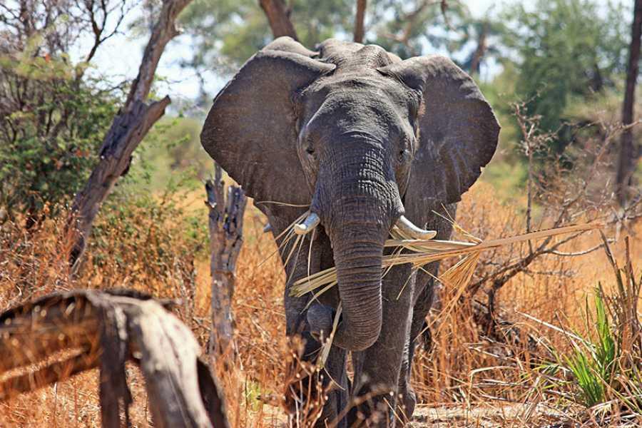 ECO-AFRICA CLIMBING 7 DAYS SAFARI NORTHERN TANZANIA