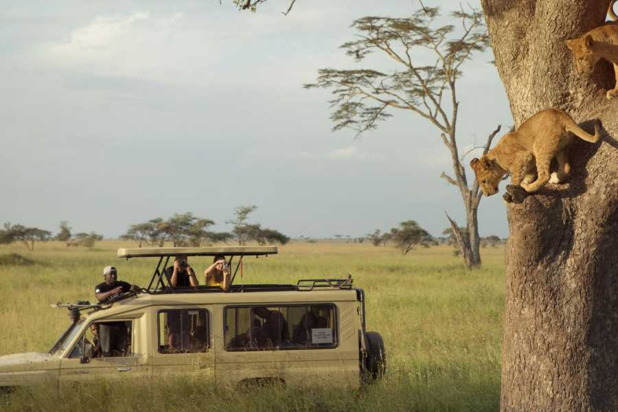 ECO-AFRICA CLIMBING 14 DAYS FAMILY HOLIDAY SAFARI AND ZANZIBAR