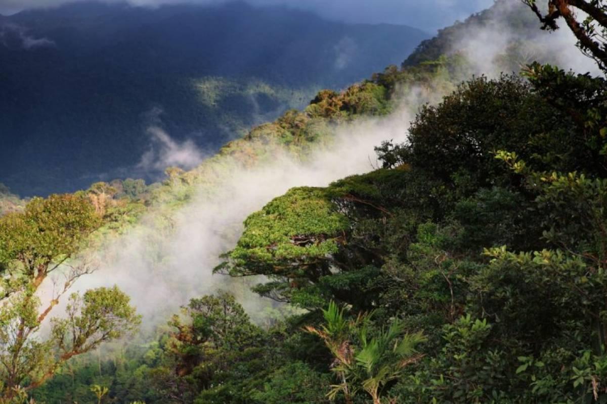 Tour Guanacaste Monteverde Cloud Forest