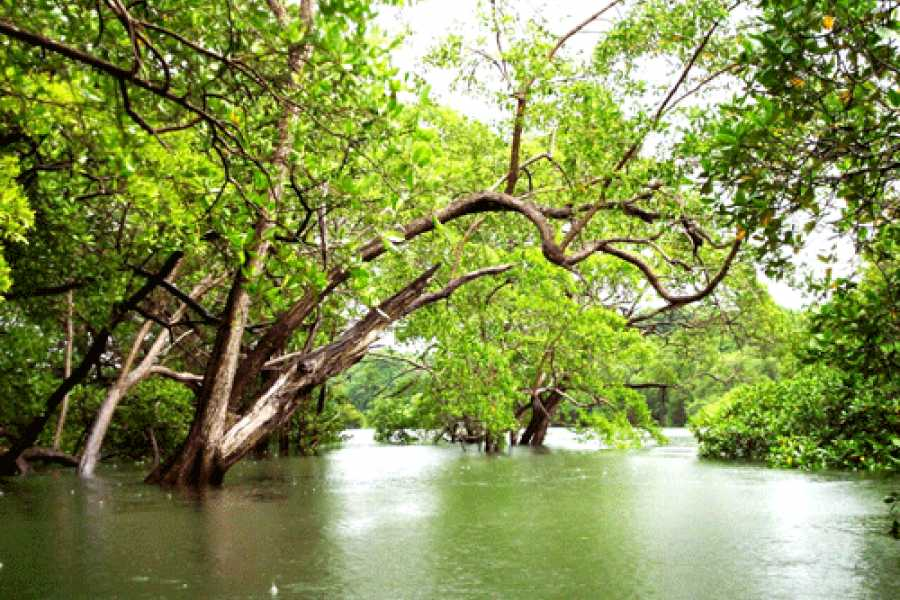 Tour Guanacaste On-Line Tamarindo Mangrove & Estuary Tour by Boat