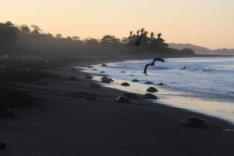Tour Guanacaste On-Line Ostional Turtle Nesting Experience
