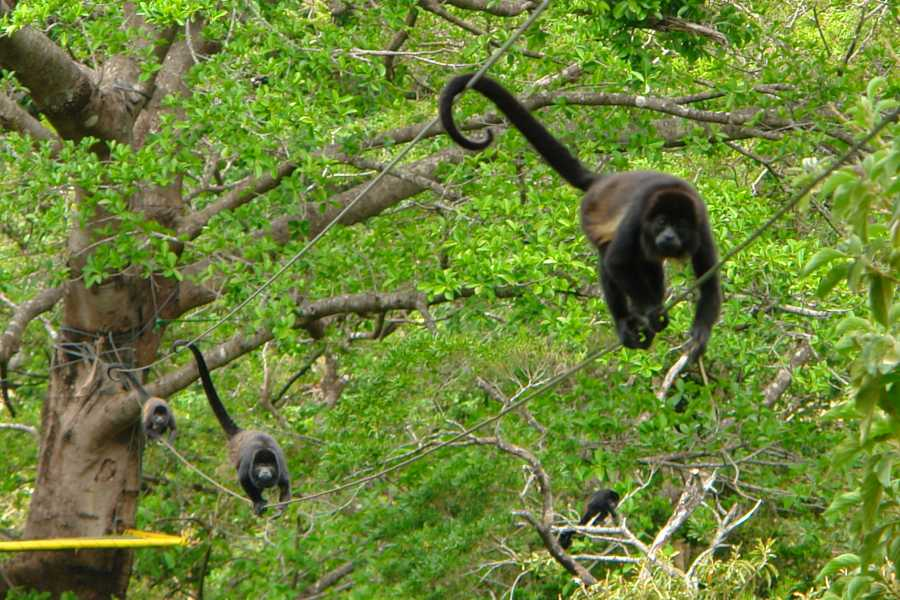 Tour Guanacaste On-Line Palo Verde Wildlife River Boat Cruise