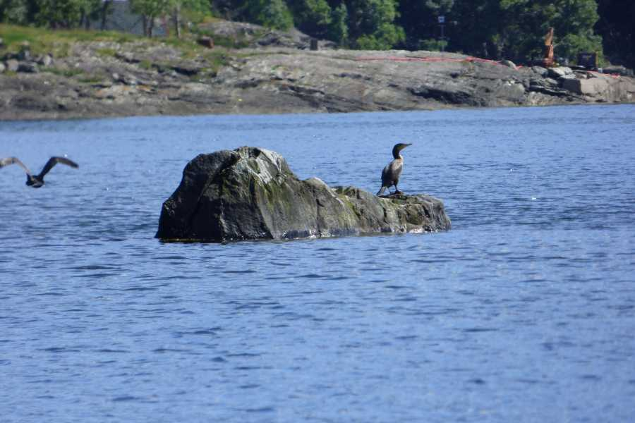 Hardanger Feriesenter AS Bootverhuur - 30 ps vissersboot