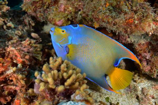 1 Tank Guided Dive House Reef