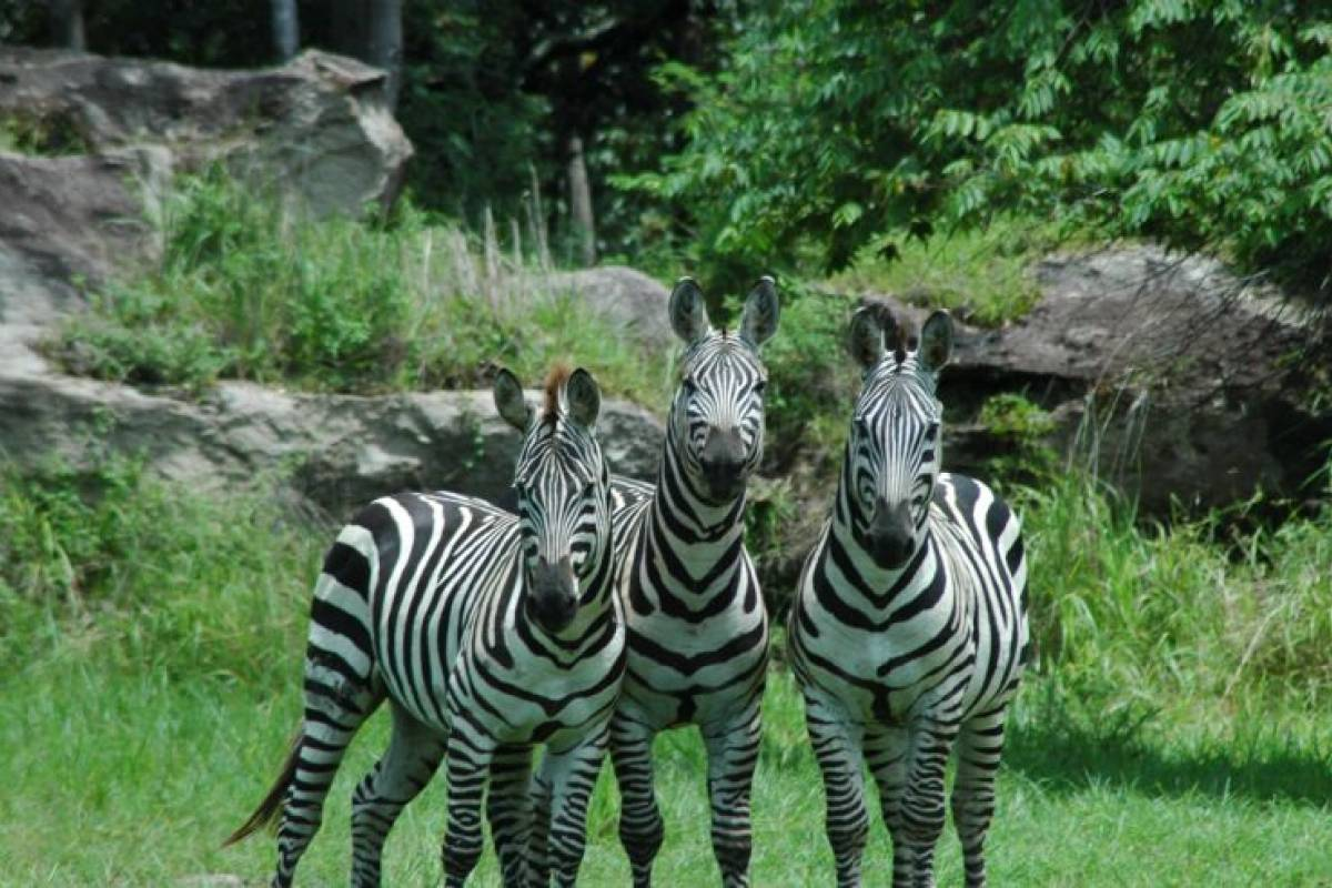Tour Guanacaste Africa Safari Adventure Park