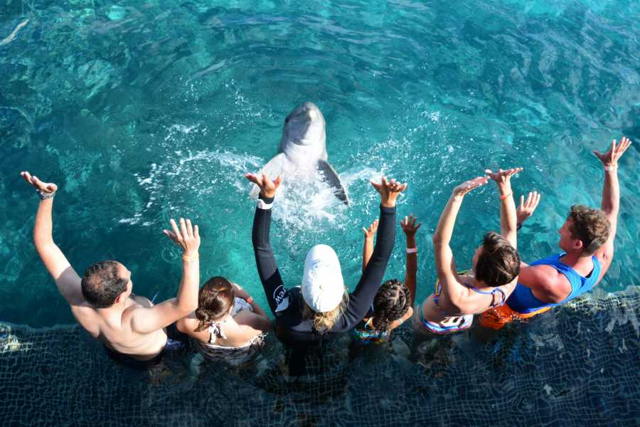 Blue Bay Dive & Watersports Dolphin Encounter
