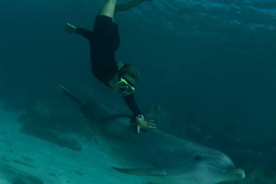 Blue Bay Dive & Watersports Delphin freitauchend