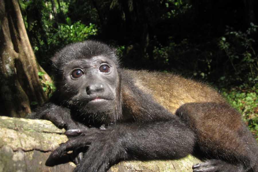CongoCanopy.com Canopy Horseback Monkey Combo