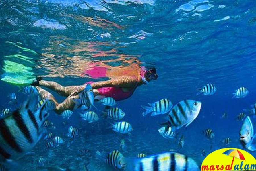 Marsa alam tours Shaab Samadai Snorkeling trip from Marsa Alam