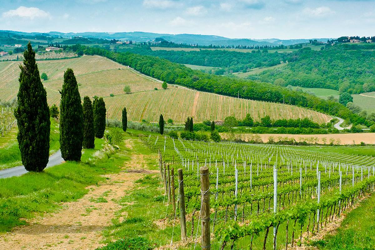 Lookals Professional Wine Tour in Piedmont day-trip from Milan
