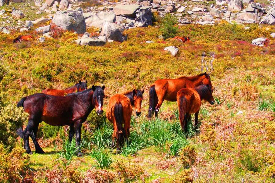 Gerês Holidays 3D/2N Turismo Equestre no Gerês