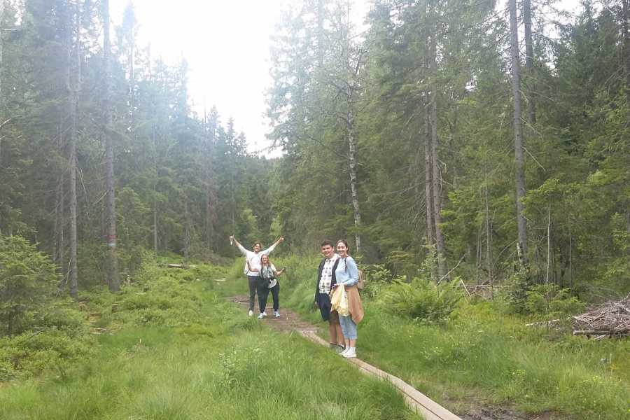 Viking Biking Nature Walks: Forest to Fjord