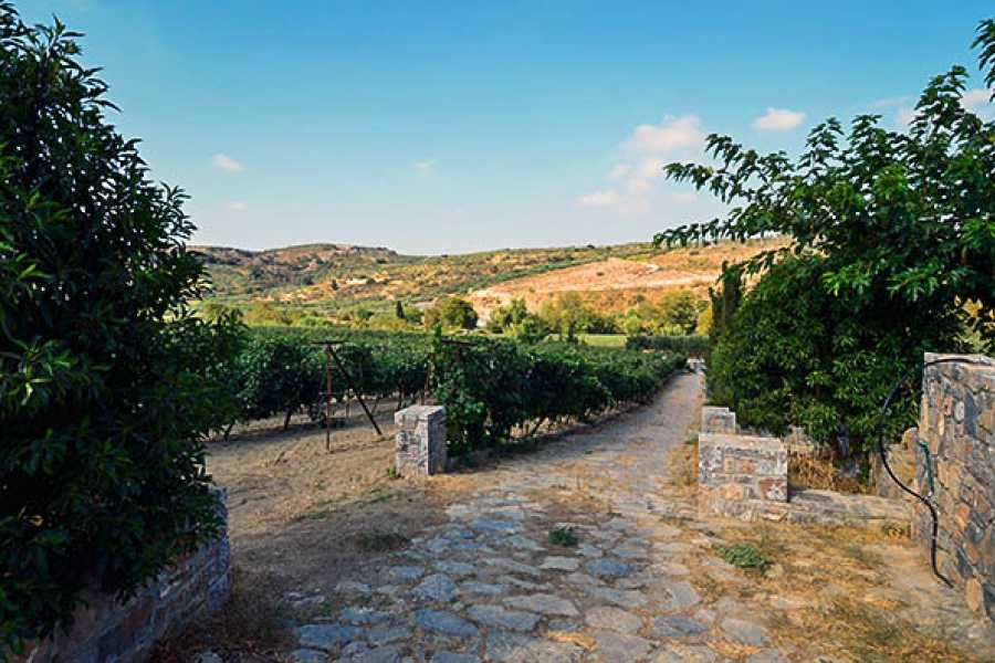 Vintage Routes Crete Private Peza Wine Tasting Day Tour