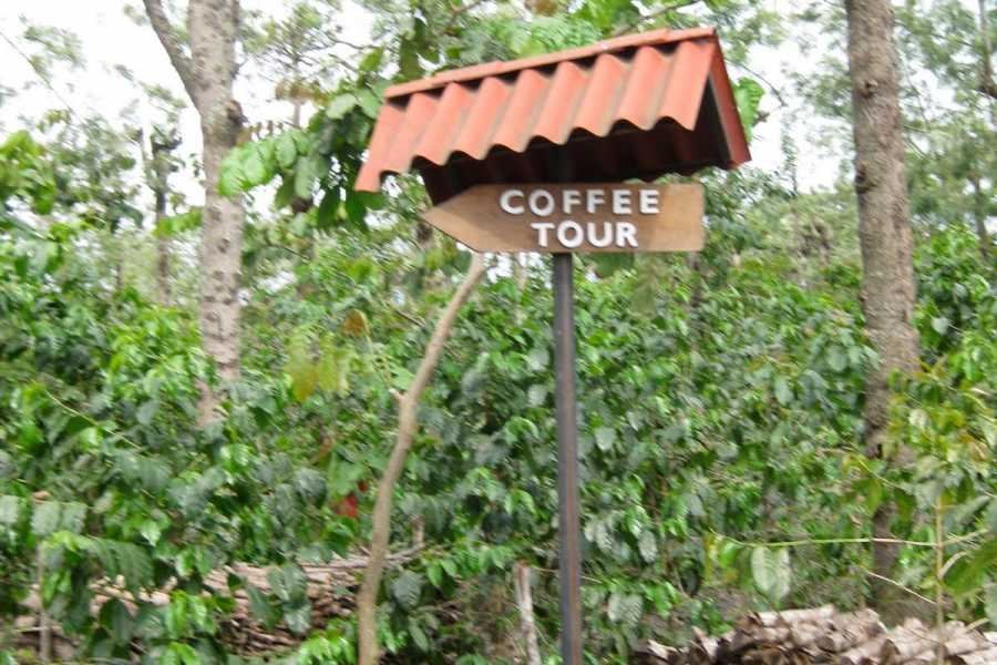 Maya World Tours La Azotea Coffee Tour
