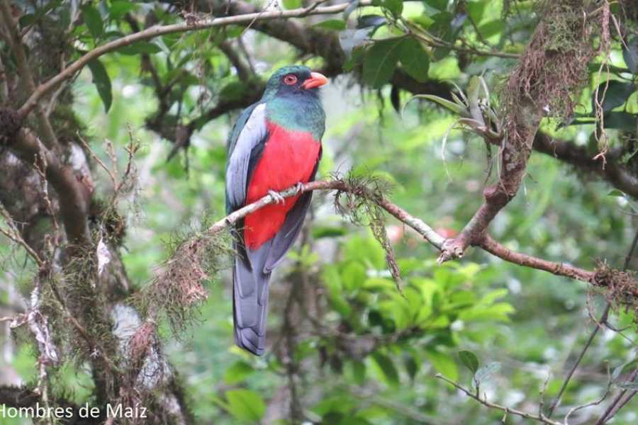 Maya World Tours Bird Watching Tour from Flores