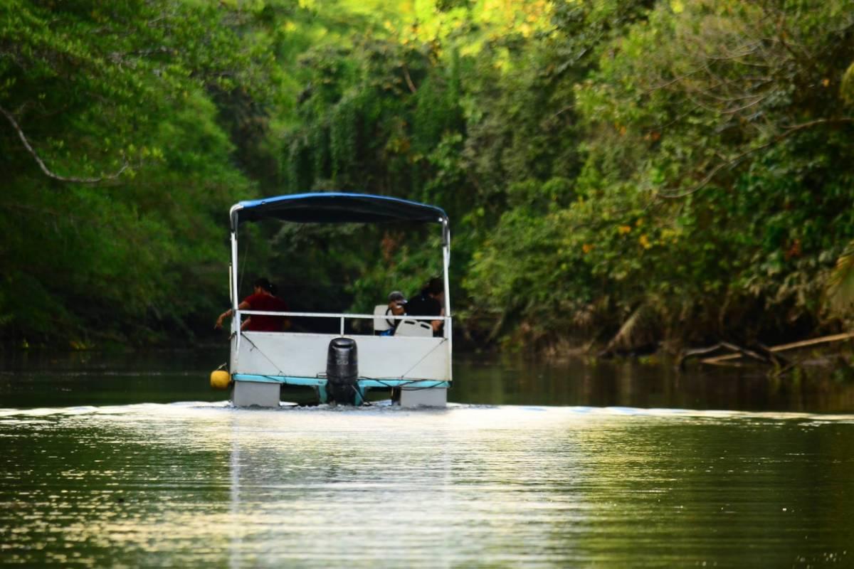 Uvita Information Center Sierpe Mangrove Boat Tour