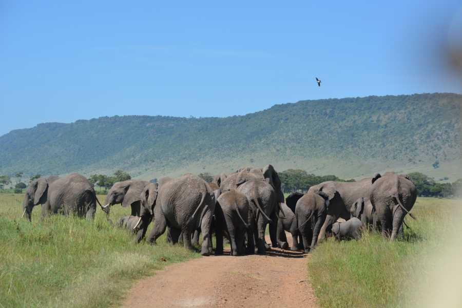 AnyActivities by H.I.S. Kenya & Tanzania Adventure and Hot Ballon