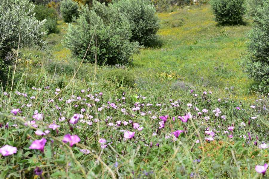 Paleochora Nature IKE WW3  Classics of the Selino Region