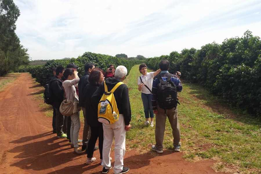 Around SP PRIVATE COFFEE PLANTATION HACIENDA TOUR (8h)