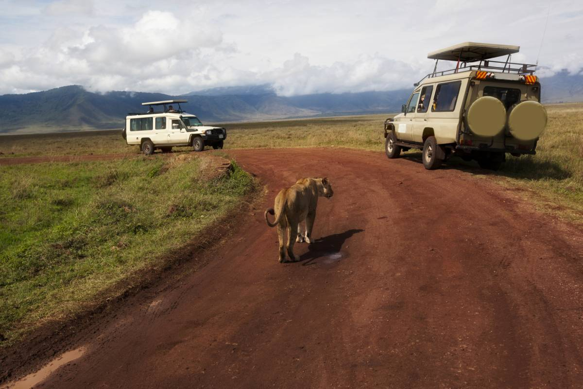 AnyActivities by H.I.S. 5 Days Private Tanzania Delight Safari