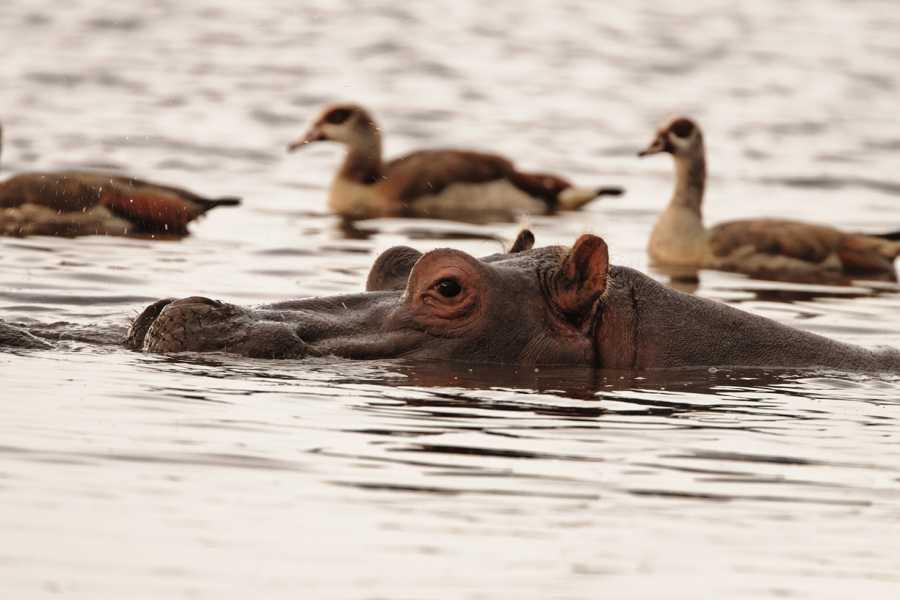 AnyActivities by H.I.S. 5 Days Private Tanzania Delight Safari