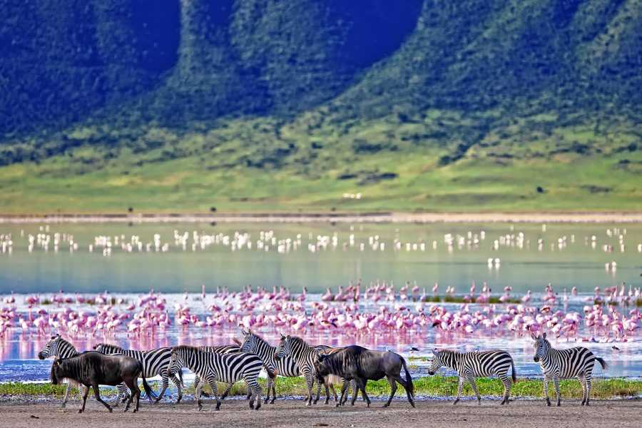 AnyActivities by H.I.S. 8 Days Private Kenya & Tanzania Adventure Safari