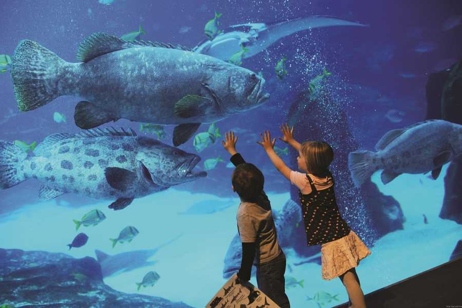 BarefootPlus Travel Istanbul Full Day Private Tour - Viasea Aquarium & Theme Park