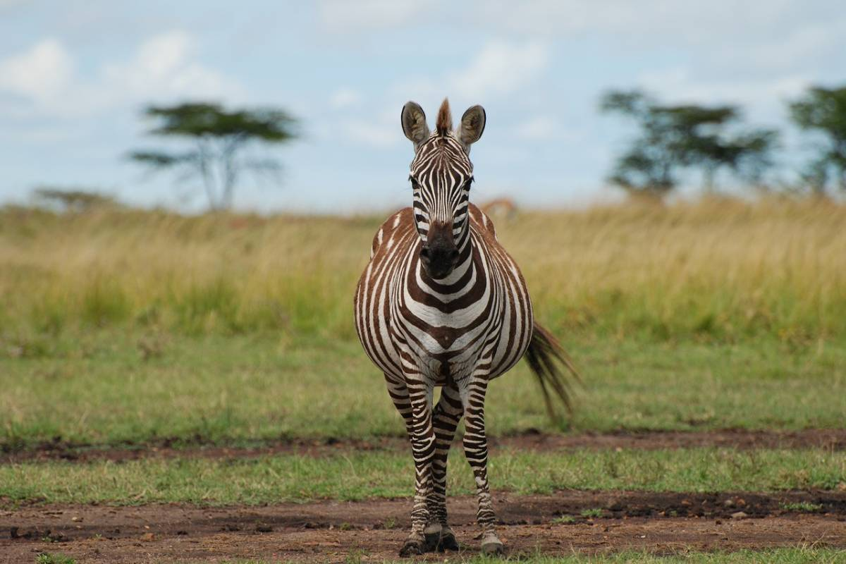 AnyActivities by H.I.S. 5 Days Private Kenya Delight Safari