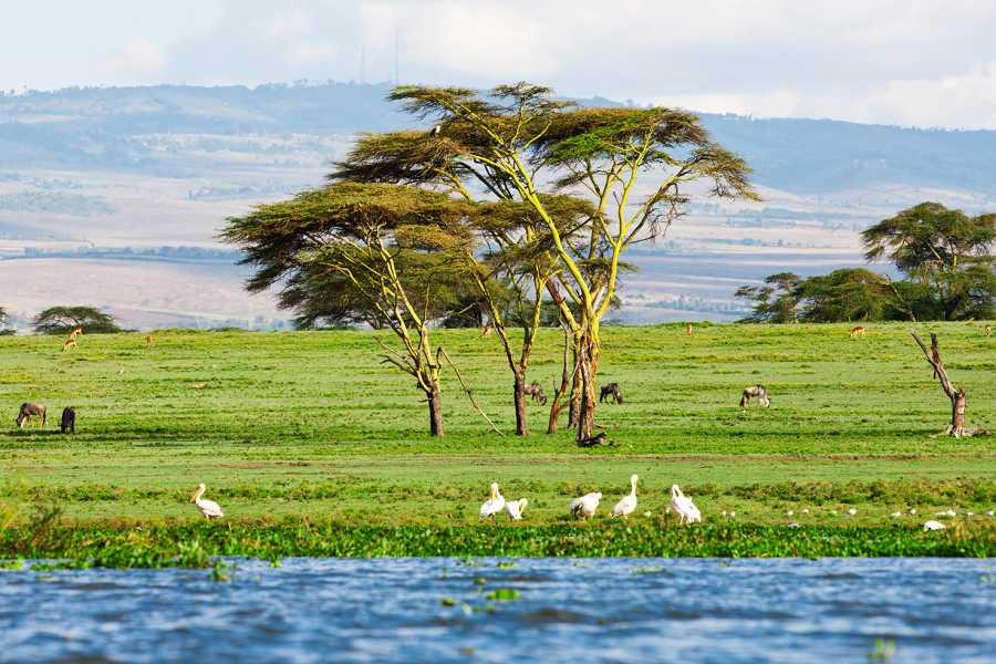 AnyActivities by H.I.S. 5 Days Private Kenya Delight Safari
