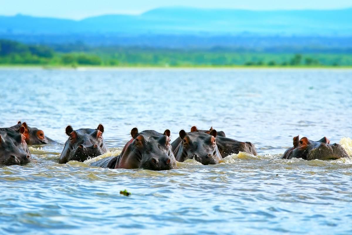 AnyActivities by H.I.S. 7 Days Private Karibu Kenya Safari