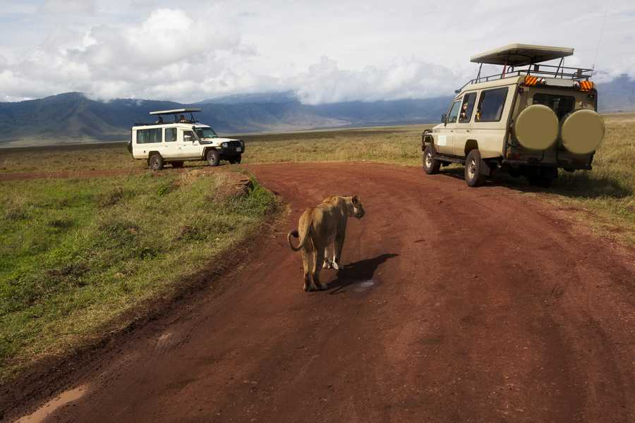 AnyActivities by H.I.S. 7 Days Private  Classic Tanzania Safari