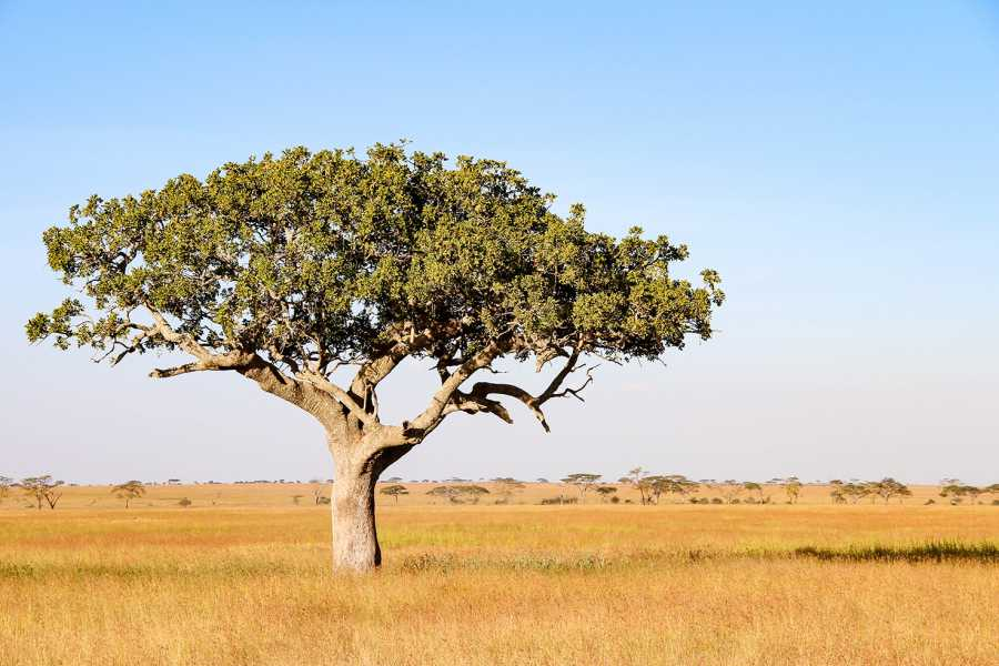 AnyActivities by H.I.S. 6 Days Private Tanzania Explorer Safari