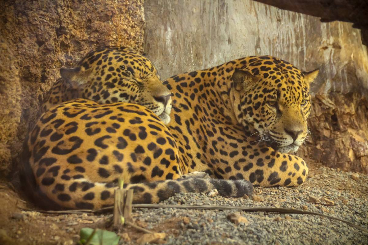 Tour Guanacaste Ultimate Animal Adventure Tour