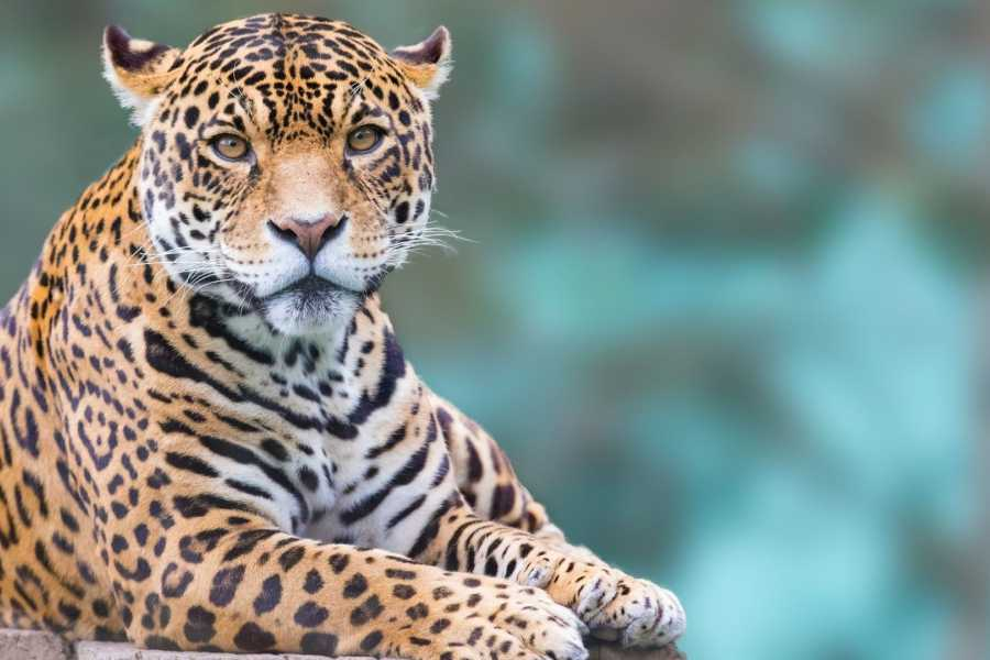 Tour Guanacaste Ultimate Wildlife Adventure Safari