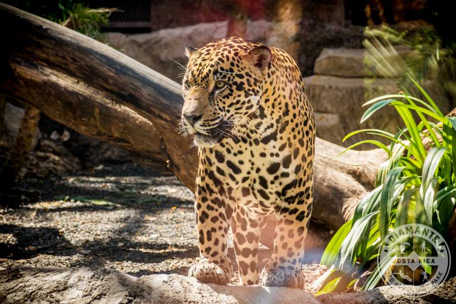 Tour Guanacaste Ultimate Wildlife Adventure Safari