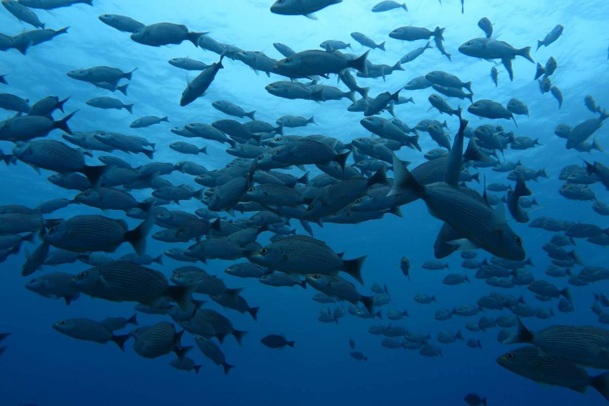 Uvita Information Center Caño Island Snorkeling  full day tour - Leaving from Sierpe