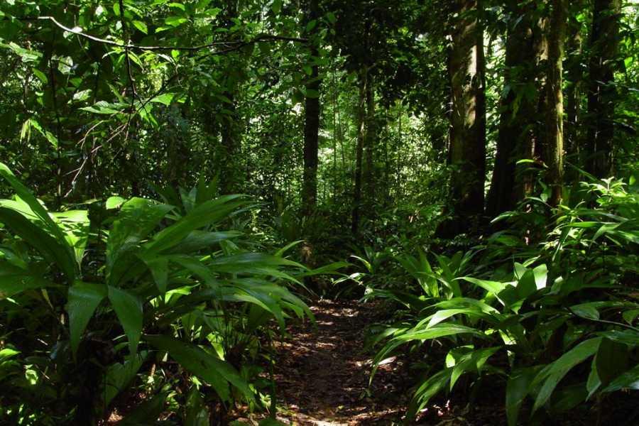Uvita Information Center Parque Nacional Corcovado - día completo desde Sierpe