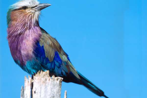 11 Days / 10 nights : Bird Watchers paradise