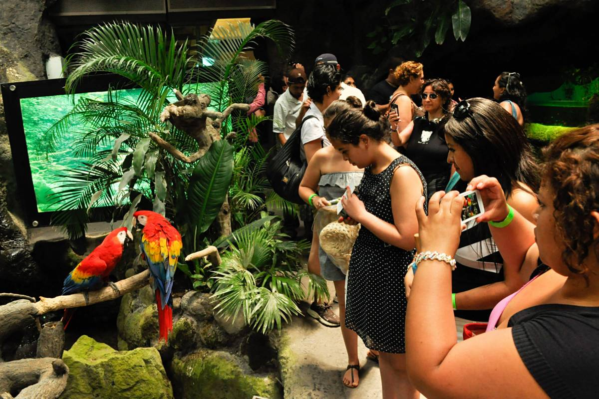 Tours & Tickets Operador Turístico 8 ATTRACTIVE, MUSEUMS INCLUDED
