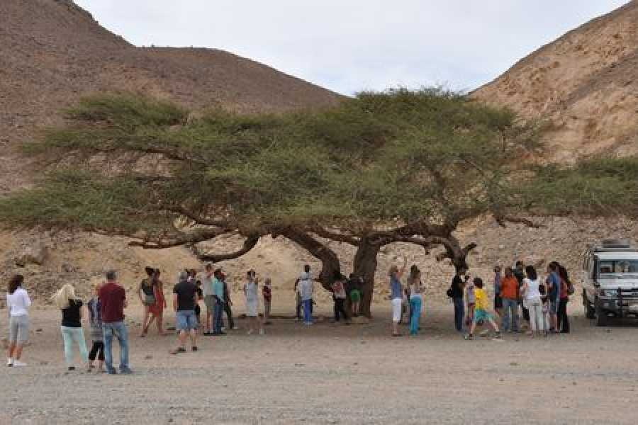 Marsa alam tours Morning Quad Bike Desert Safari from marsa alam