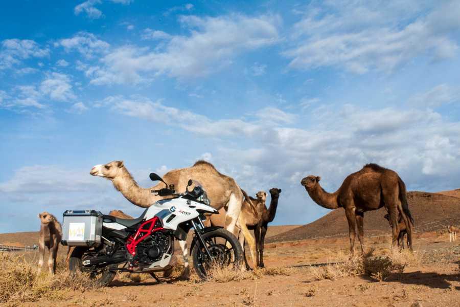 Wheels of Morocco Atlas to Sahara