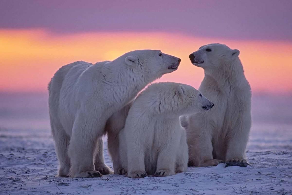 Maybe Sailing Svalbard Explorer