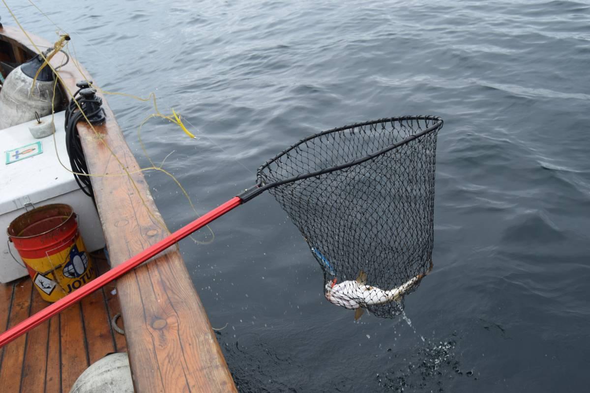 www.gosta.co Go Fishing Private