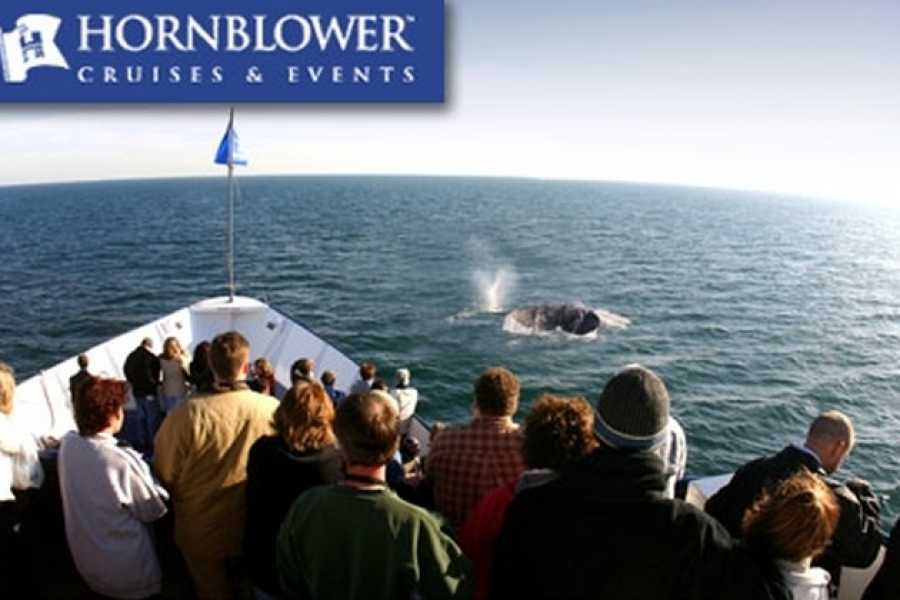 Dream Vacation Builders Hornblower Yacht Dinner Cruises San Diego
