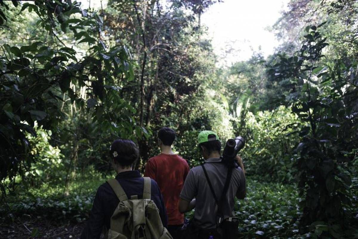 Uvita Information Center Mangrove Walk