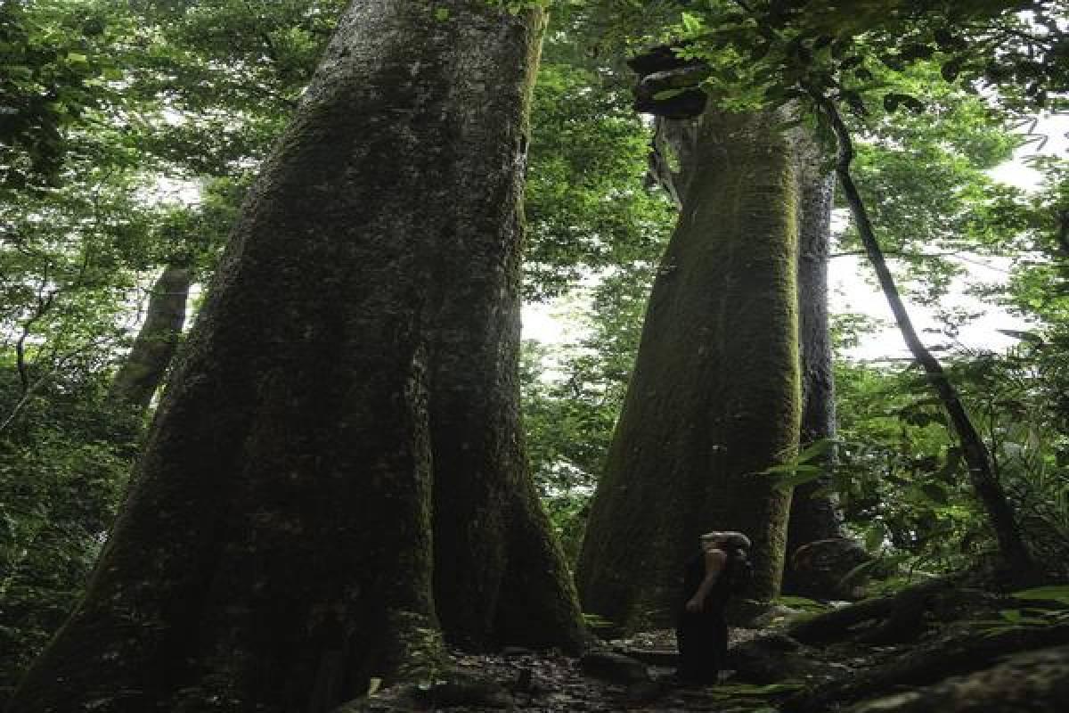 Uvita Information Center Rainforest Experience