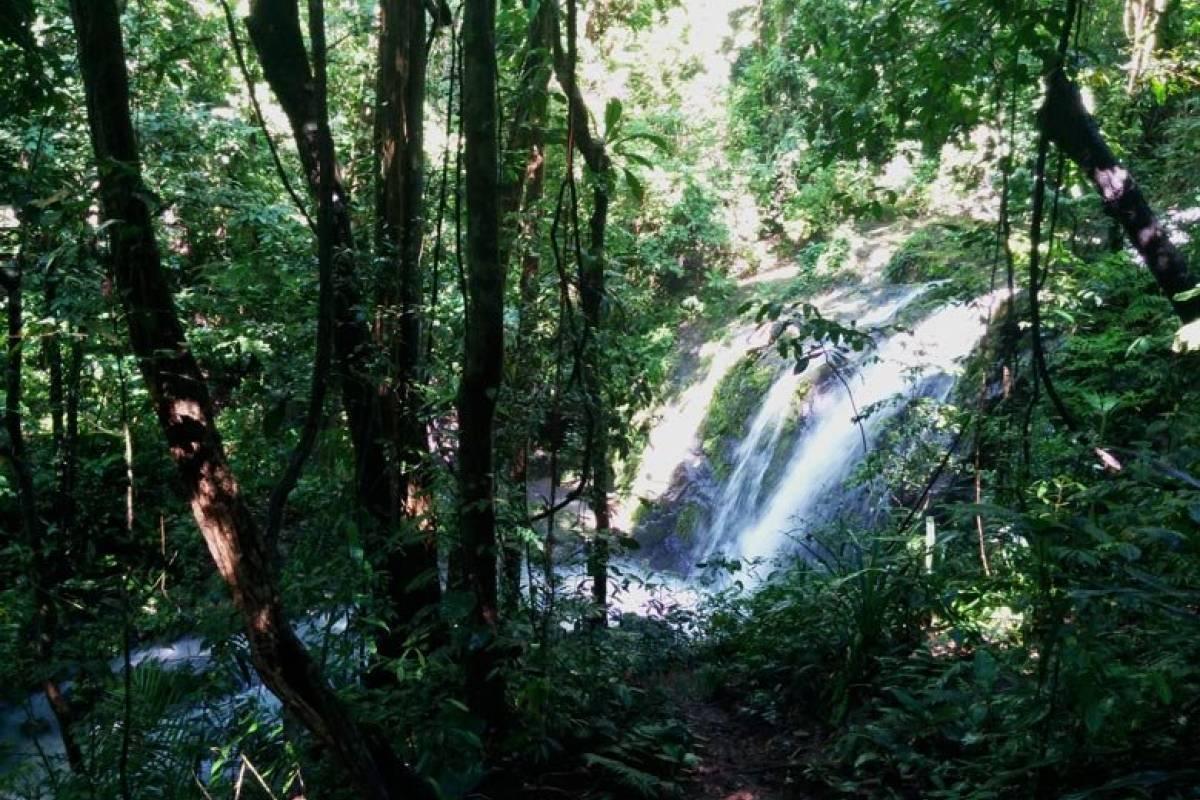 Uvita Information Center Hike at the Manuel Antonio National Park