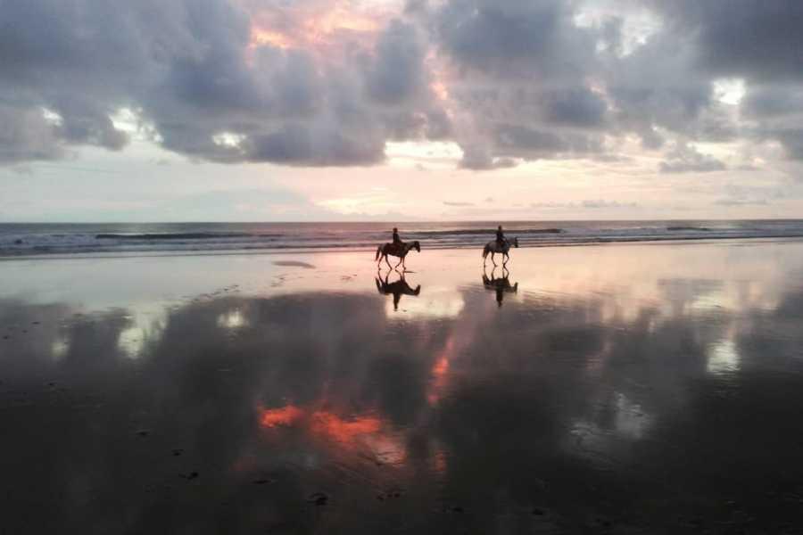 Uvita Information Center Sunset at the beach Horseback Riding at La Merced Wildlife Refuge
