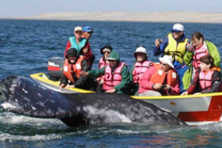 Baja Jones Adventure Travel 11 day combo gray and blue whales trip - 2/8/2019 - 2/18/2019